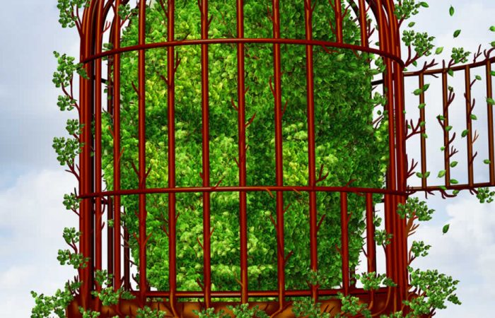 Cele 7 bariere ale dezvoltării personale